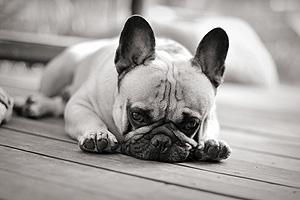 Bringen Sie Ihre Haustiere vor einer Besichtigung kurzzeitig bei Freunden, Bekannten oder Ihrem Dogsitter unter.